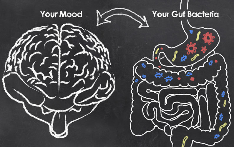 What is the gut brain axis?