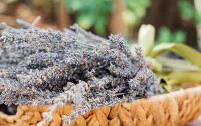 Lavender: Health Benefits & Medicinal Use